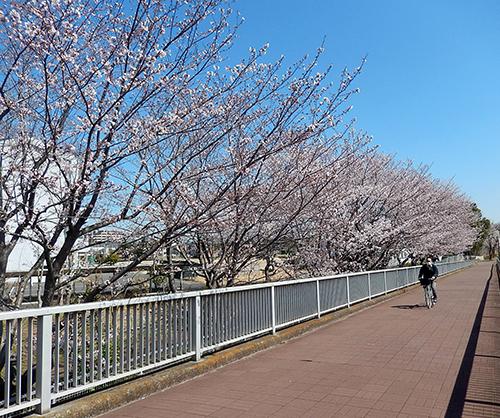 けやき台中学校脇遊歩道