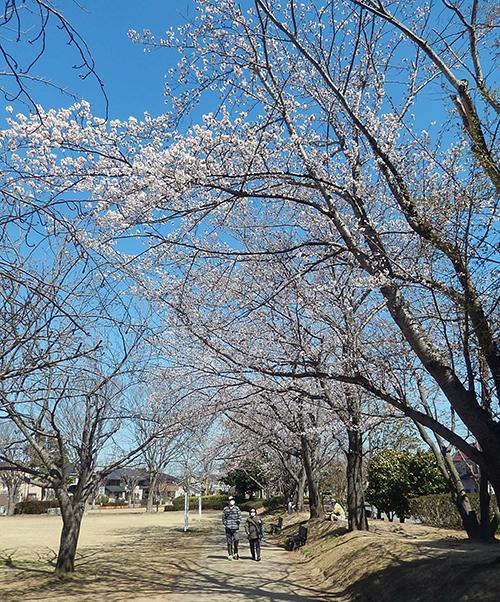 けやき台公園02
