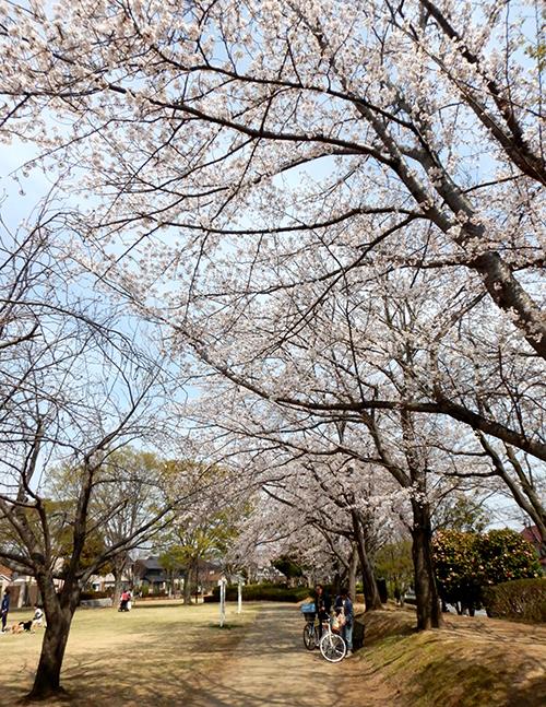 けやき台公園03