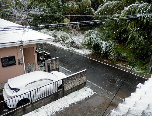 みぞれから雪
