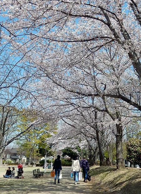 けやき台公園2018