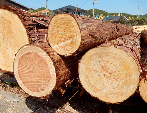日置川産樹齢100年生超ヒノキ02
