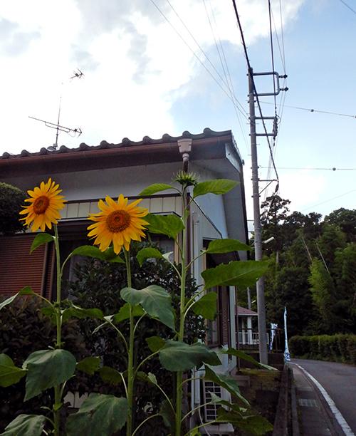 夏の花が二輪
