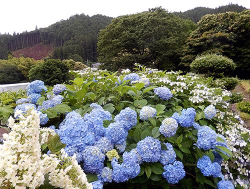 須賀川向山