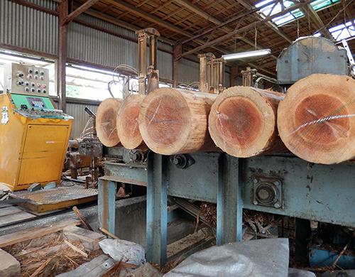 製材前の杉原木