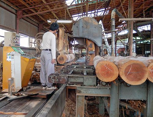 杉原木を製材中