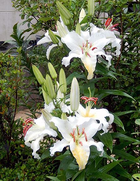 高橋さん宅に咲く花