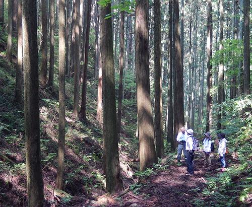 須賀川巻ヶ沢森林03