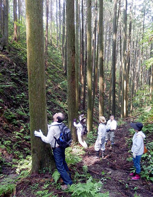 須賀川巻ヶ沢森林05