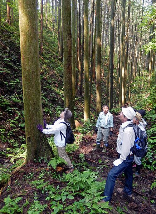 須賀川巻ヶ沢森林