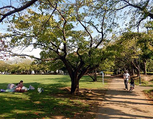 午後のけやき台公園