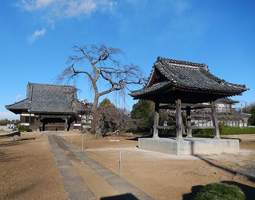 天台宗西林寺のシダレザクラ